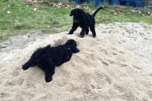 Bella i Fidel Kąpiel, piaskownica, próby żebractwa a na deser Dakota - 23s