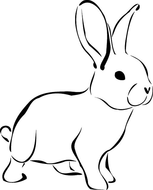 rabbit-161467_640